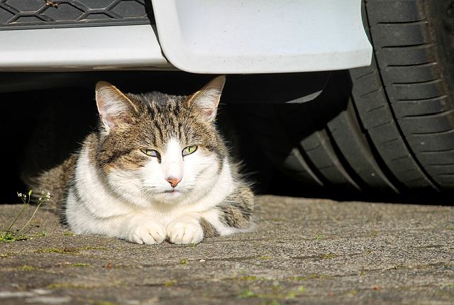 Accidental Abduction - Why Cats Disappear Without a Trace