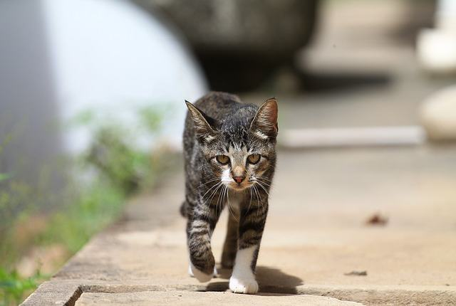 Why Cats Disappear Without a Trace