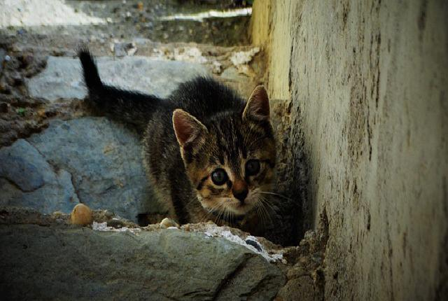 Ask around - How to Find a Lost Outdoor Cat Within Your City
