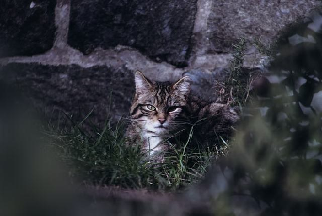 Yes, your lost cat care about you - Can a lost cat find its way home