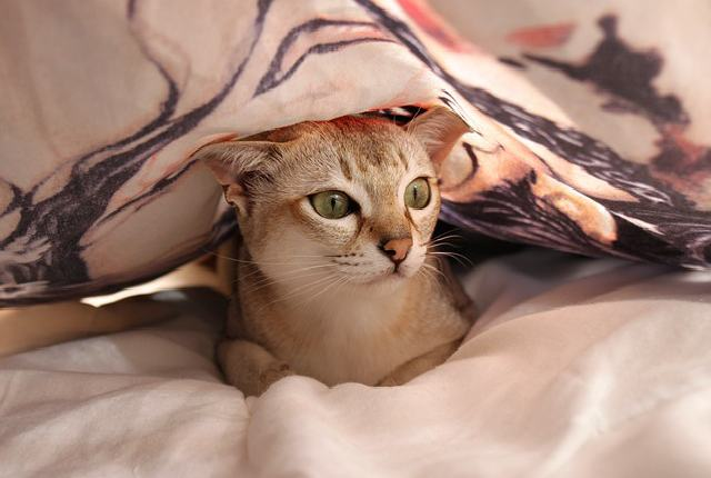 Common Behaviors of a Scared Cat - Why would my cat suddenly be afraid of me