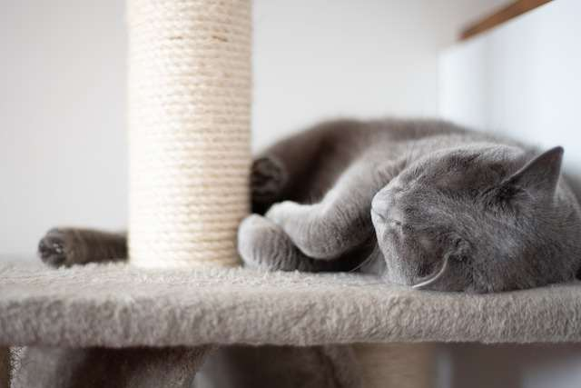 Provide a scratch post for your indoor cat - What Do Indoor Cats need