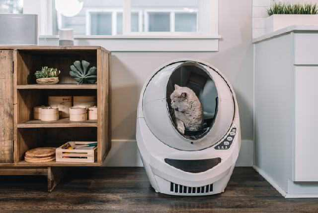 Teach Your Cat How To Use The Litter Box