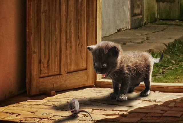 Factors that might influence When a Cat Should Hunt a Mouse