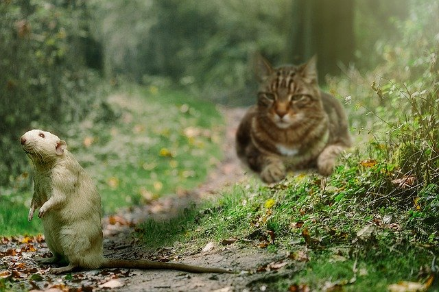 Will outdoor cats keep mice away?