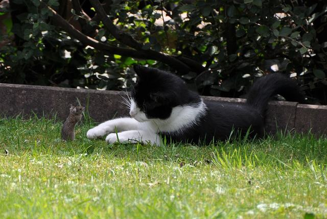 Factors That Influence How Long does it take a Cat to Catch a Mouse?