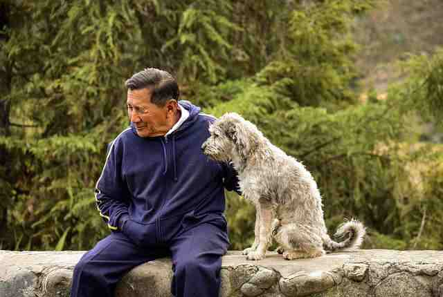 12 Best mixed breed dogs for senior citizens - Senior Citizens & Dogs