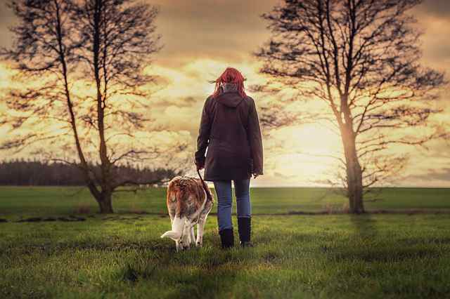 Best Dog Breeds For A Single Person