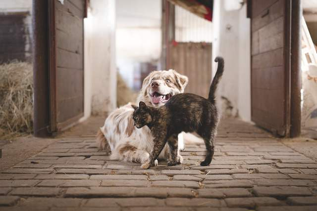 Best Dogs That Get Along With Cats