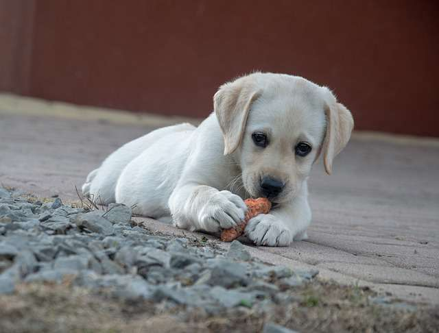 Reasons Why Dogs Love Carrots