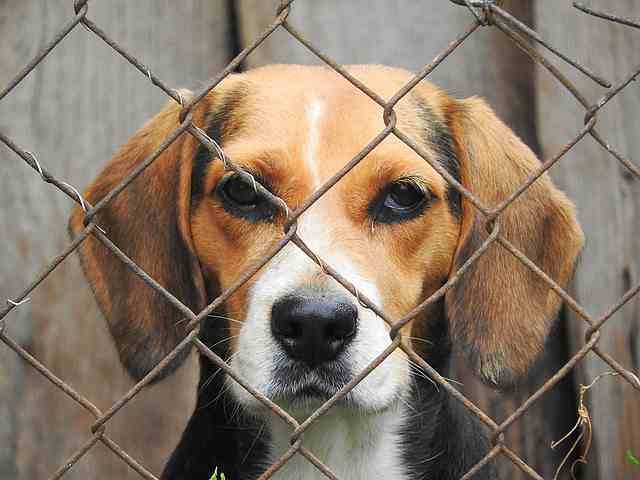 Beagle proof your home