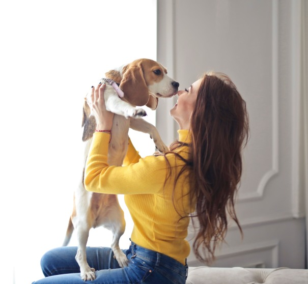 Is The Beagle a Good Family Dog