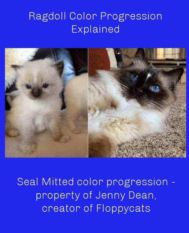 Seal Mitted color progression