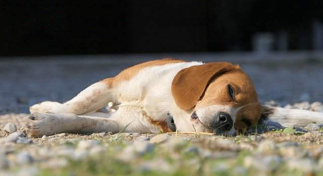 Signs of Distemper