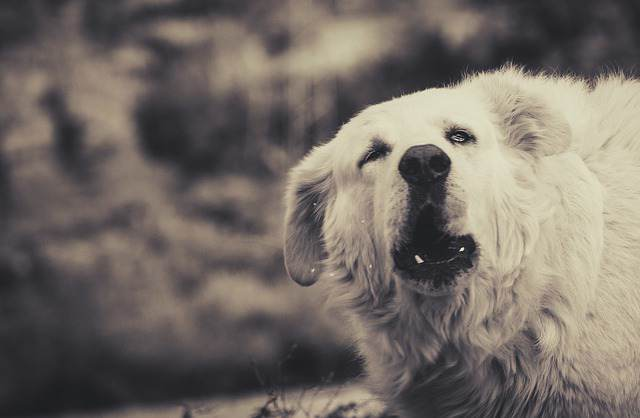 Why Dogs Bark at Night