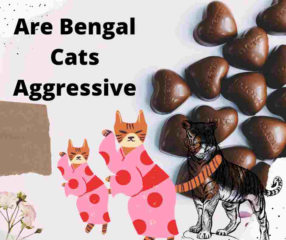 Are Bengal Cats Aggressive