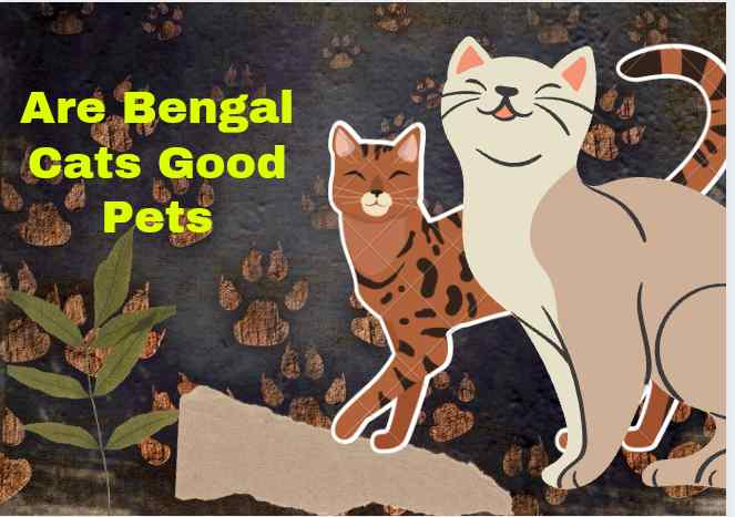 Are Bengal Cats Good Pets
