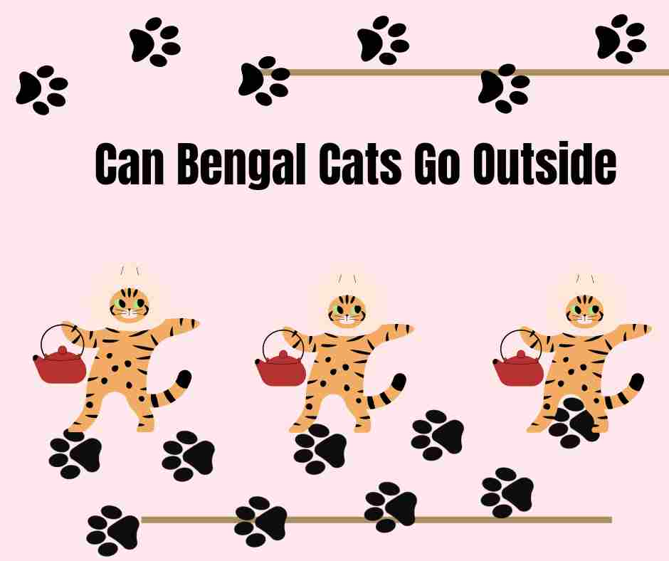 Can Bengal Cats Go Outside
