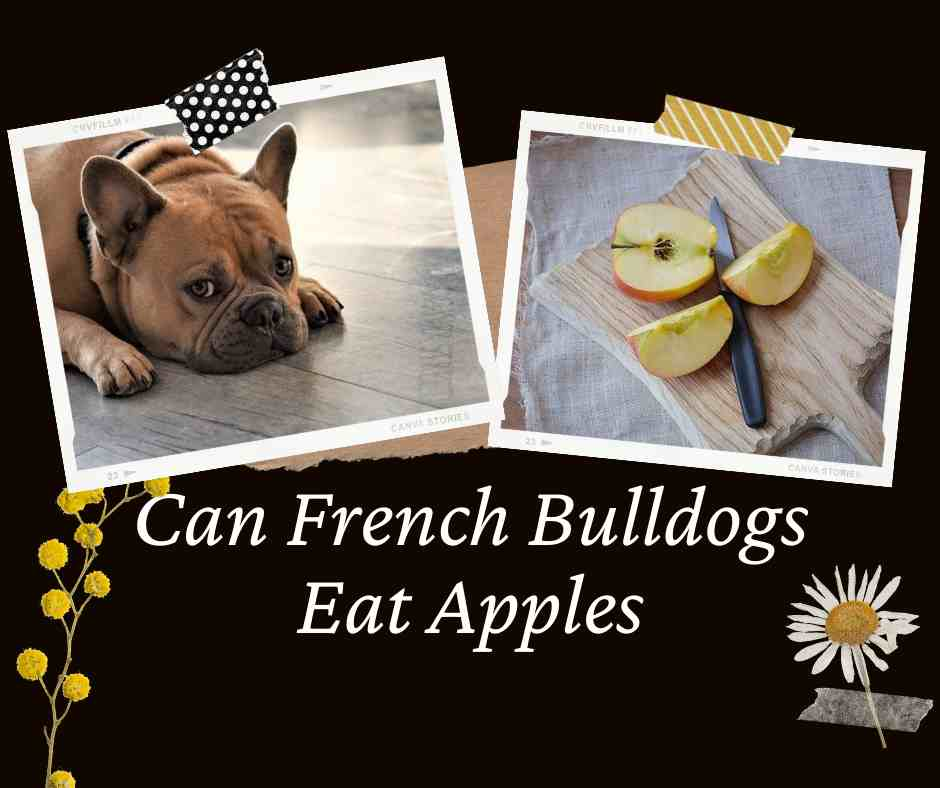 Can French Bulldogs Eat Apples
