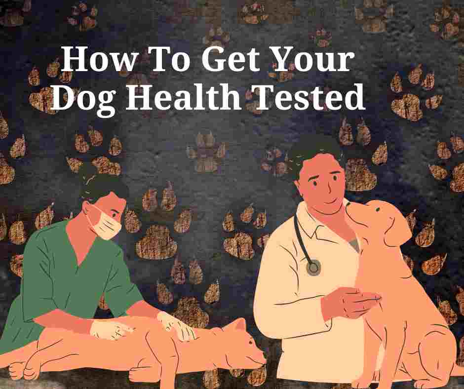 How To Get Your Dog Health Tested