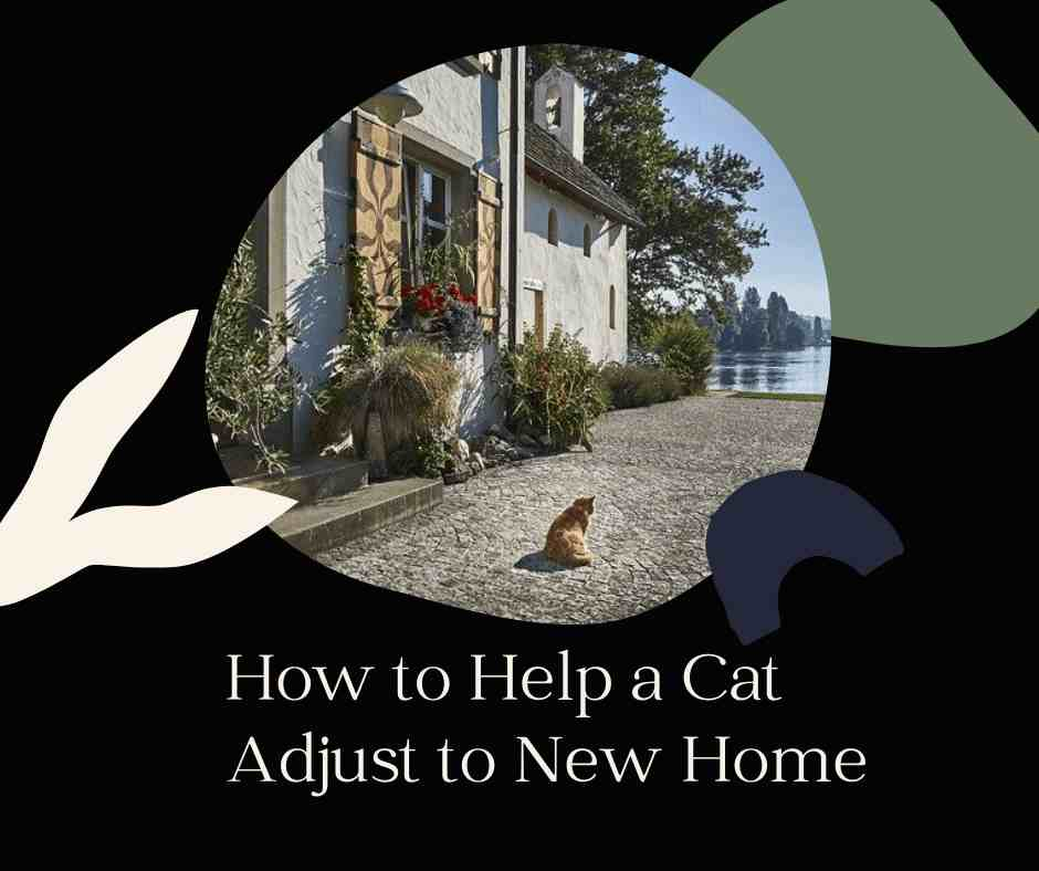 How to Help a Cat Adjust to New Home