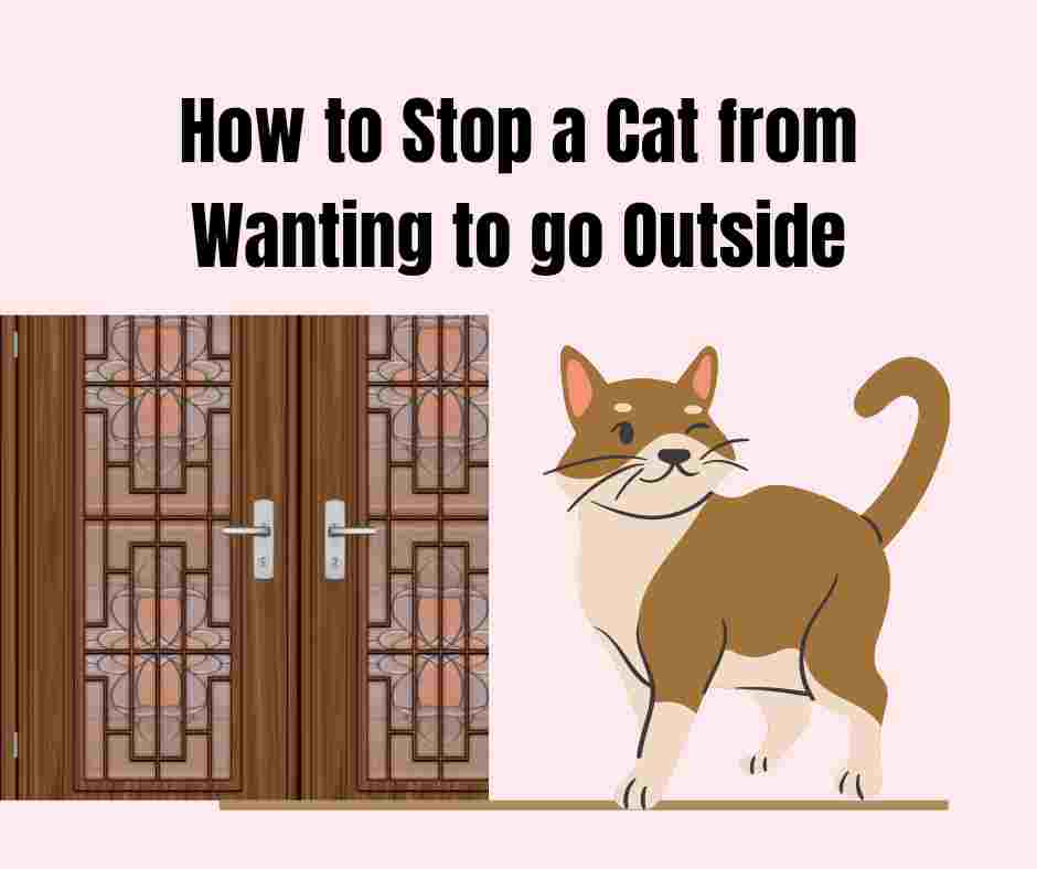 How to Stop a Cat from Wanting to go Outside