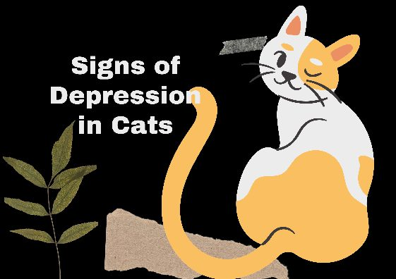 Signs of Depression in Cats