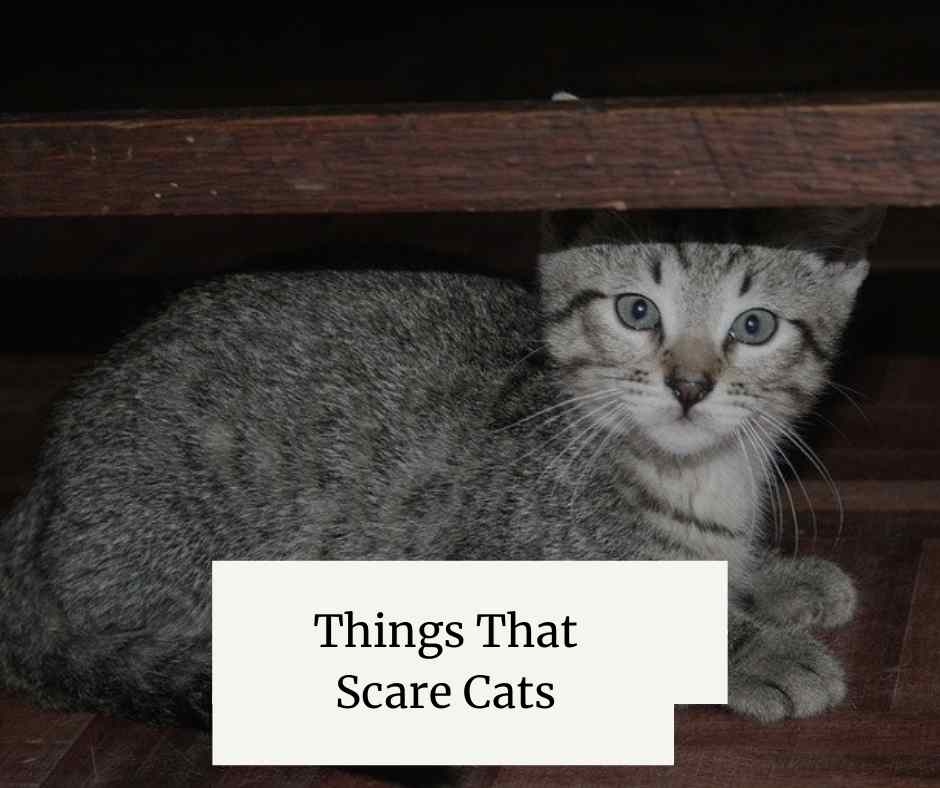 Things That Scare Cats