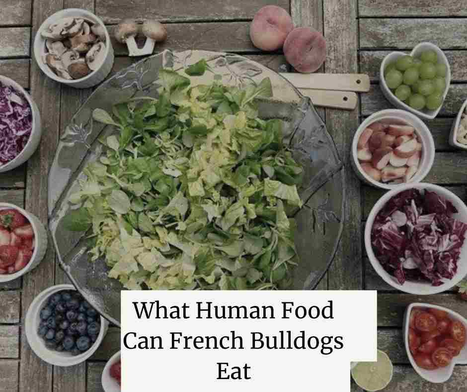 What Human Food Can French Bulldogs Eat