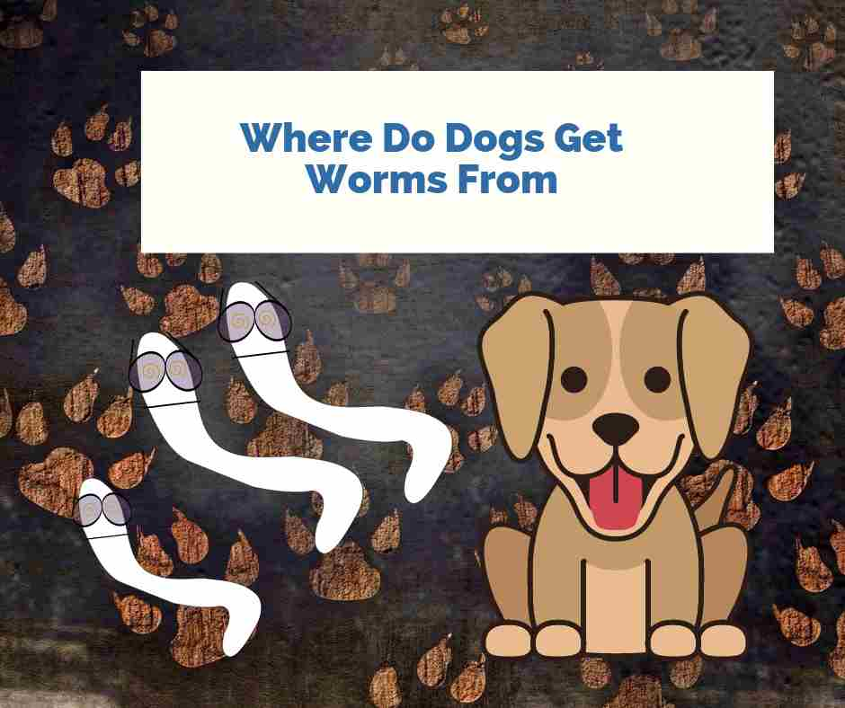 Where Do Dogs Get Worms From