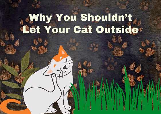 Why You Shouldnt Let Your Cat Outside