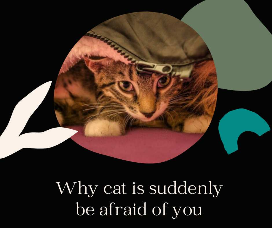 Why cat is suddenly afraid of you