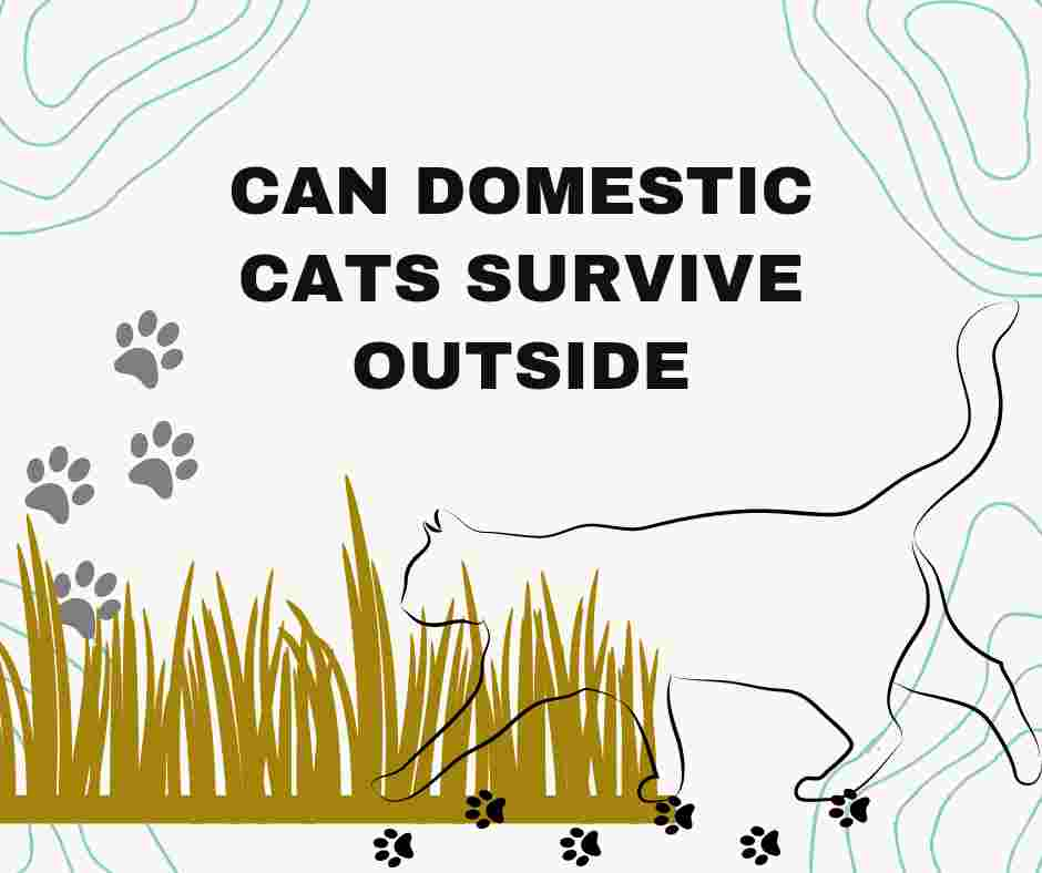 can domestic cats survive outside