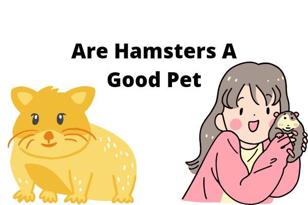Are Hamsters A Good Pet