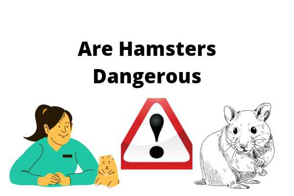 Are Hamsters Dangerous