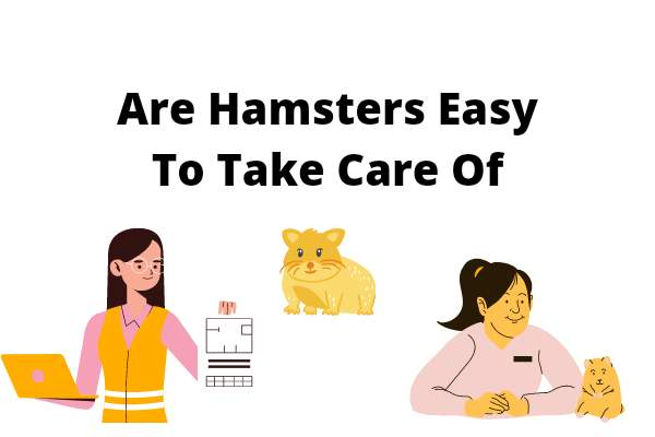 Are Hamsters Easy To Take Care Of