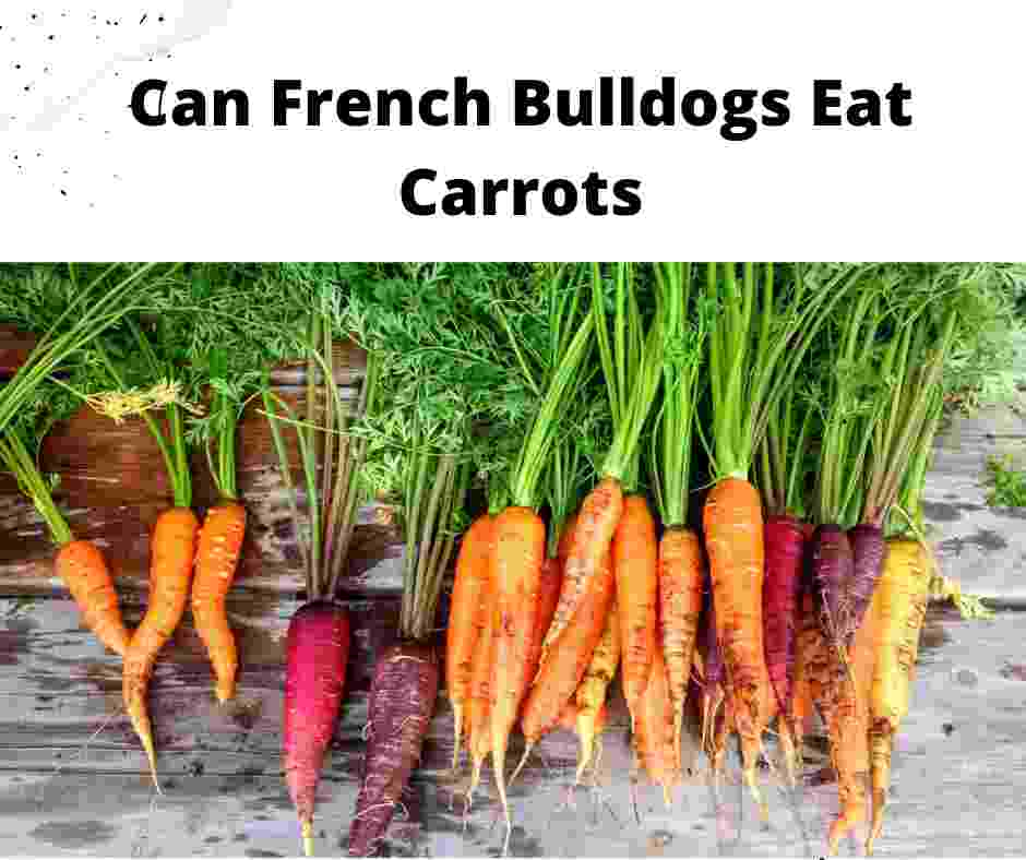 Can French Bulldogs Eat Carrots