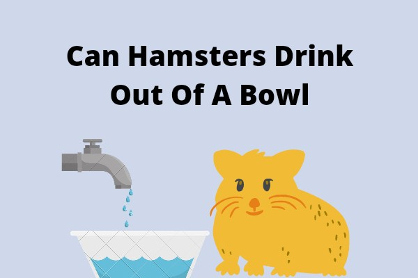 Can Hamsters Drink Out Of A Bowl