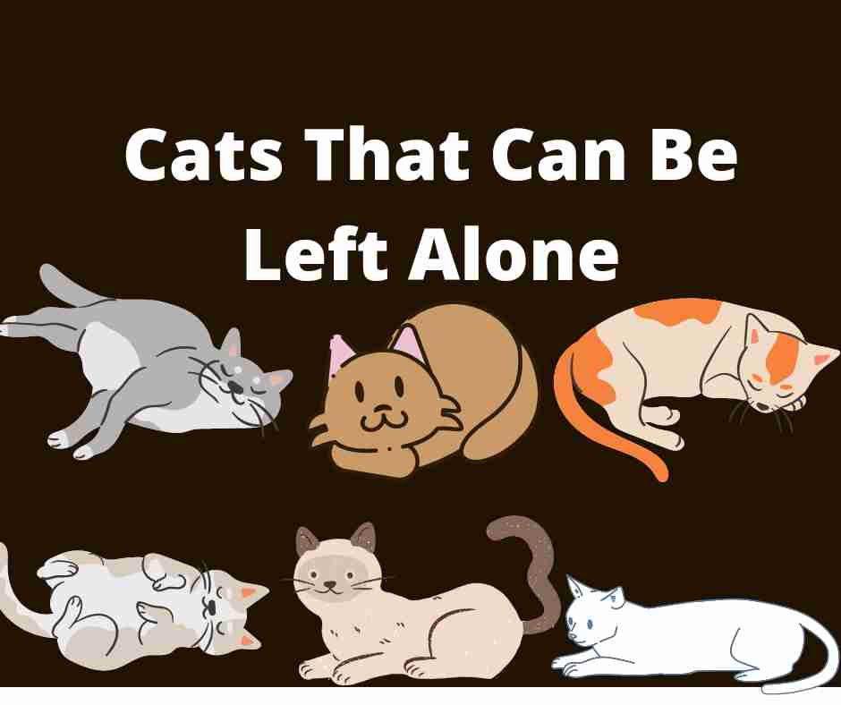 Cats That Can Be Left Alone