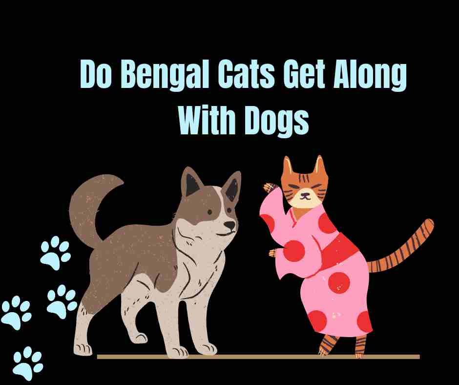Do Bengal Cats Get Along With Dogs