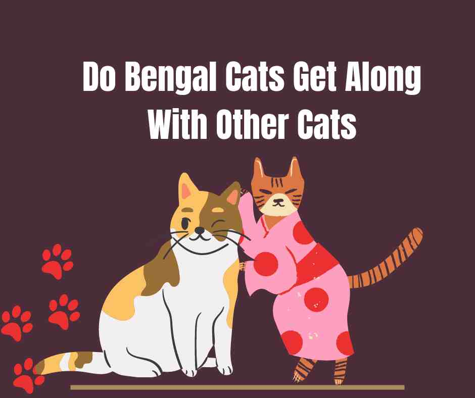 Do Bengal Cats Get Along With Other Cats