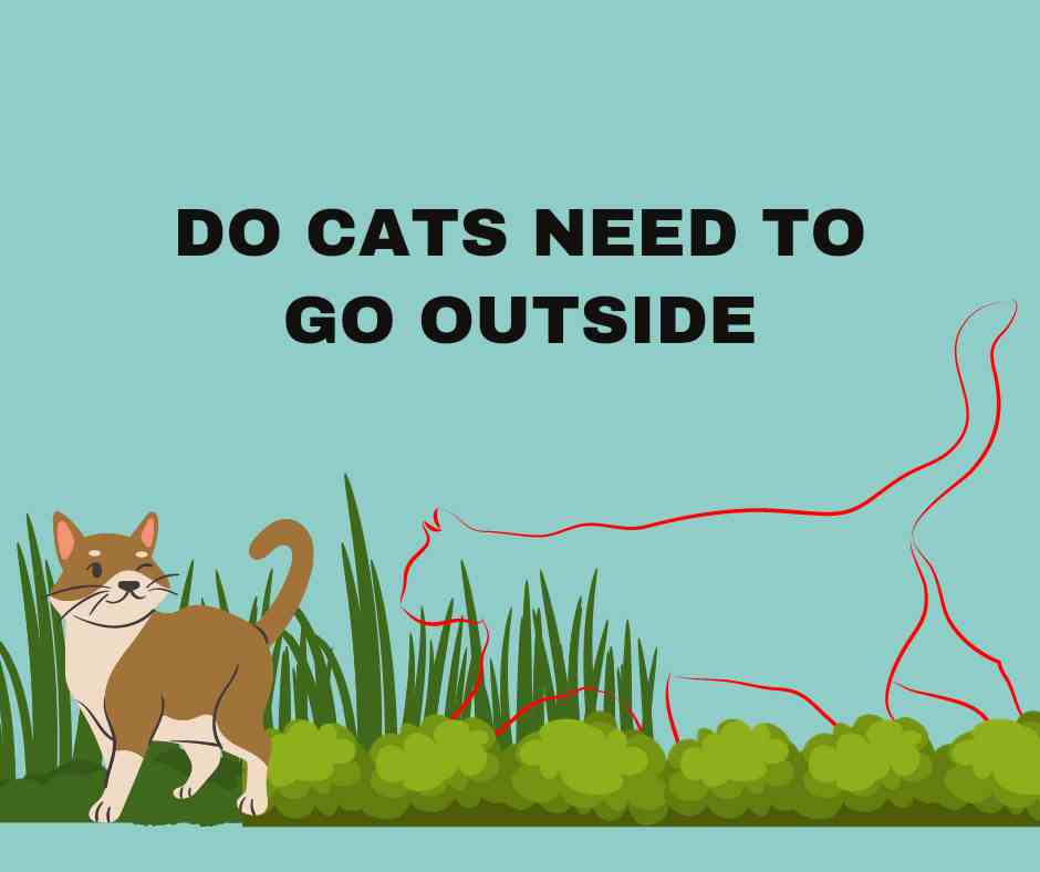 Do Cats Need To Go Outside