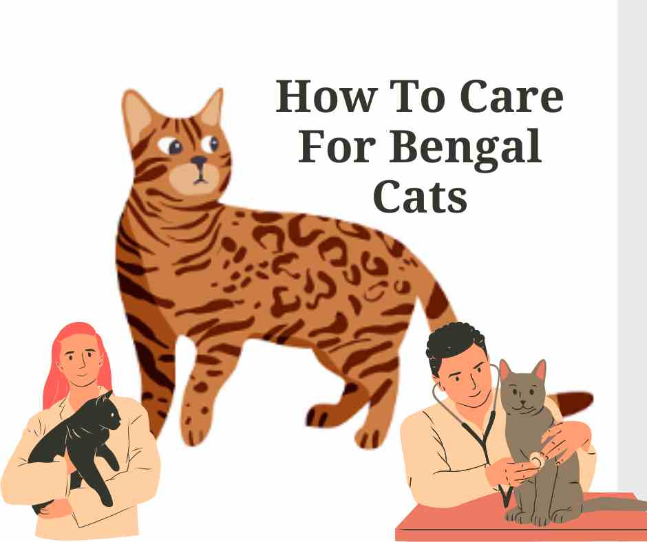 How To Care For Bengal Cats