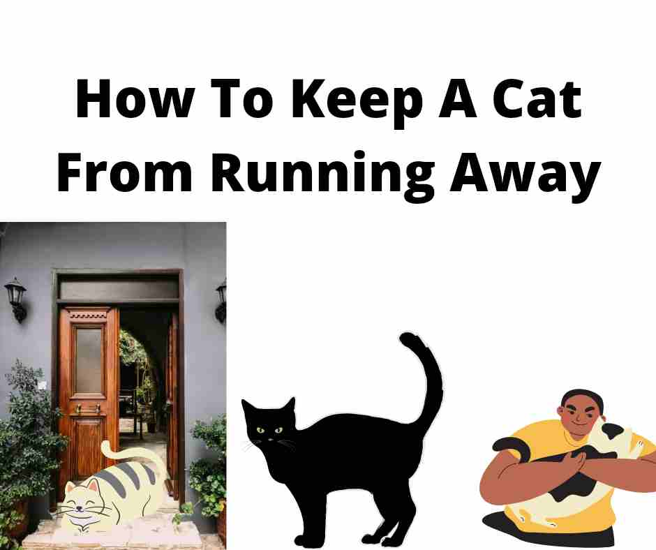 How To Keep A Cat From Running Away