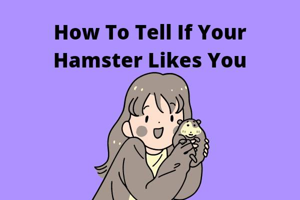 How To Tell If Your Hamster Likes You