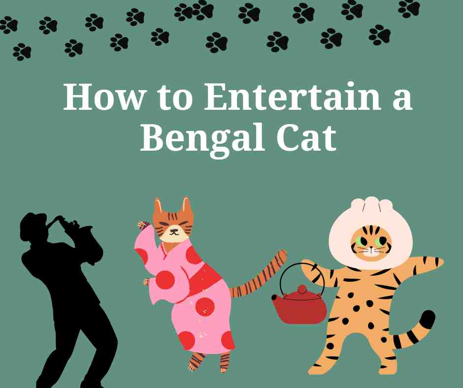 How to Entertain a Bengal Cat