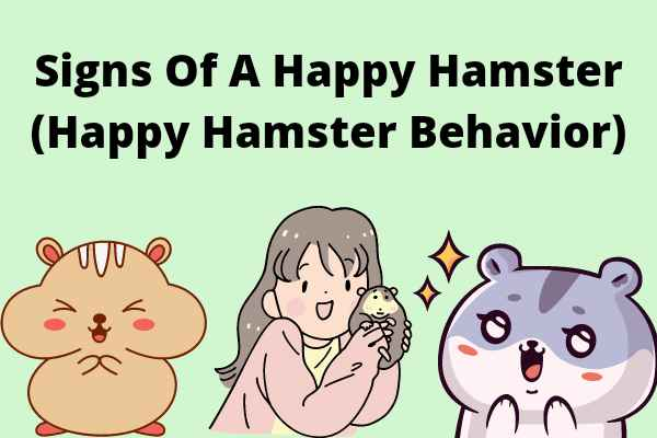 Signs Of A Happy Hamster