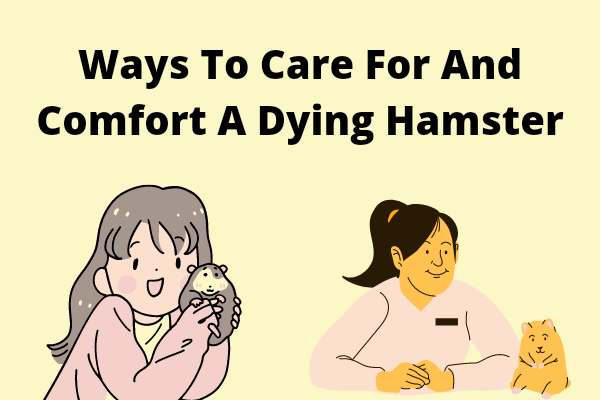 Ways To Care For And Comfort A Dying Hamster