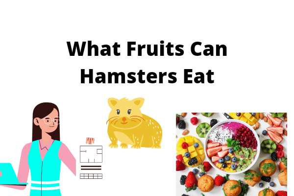 What Fruits Can Hamsters Eat