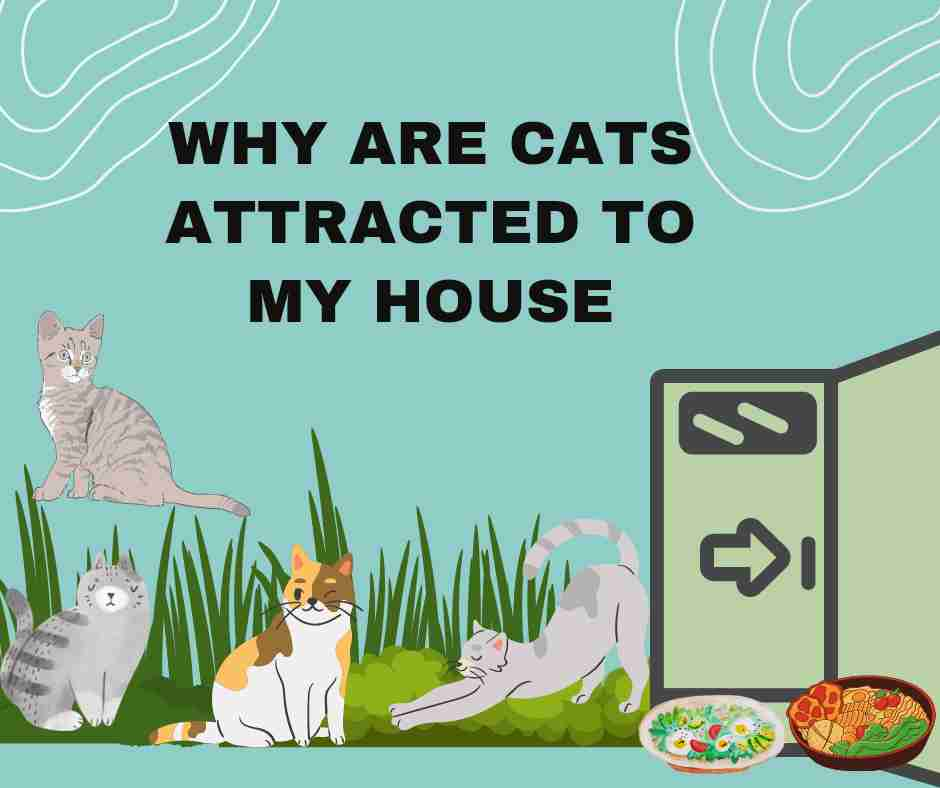 Why Are Cats Attracted To My House